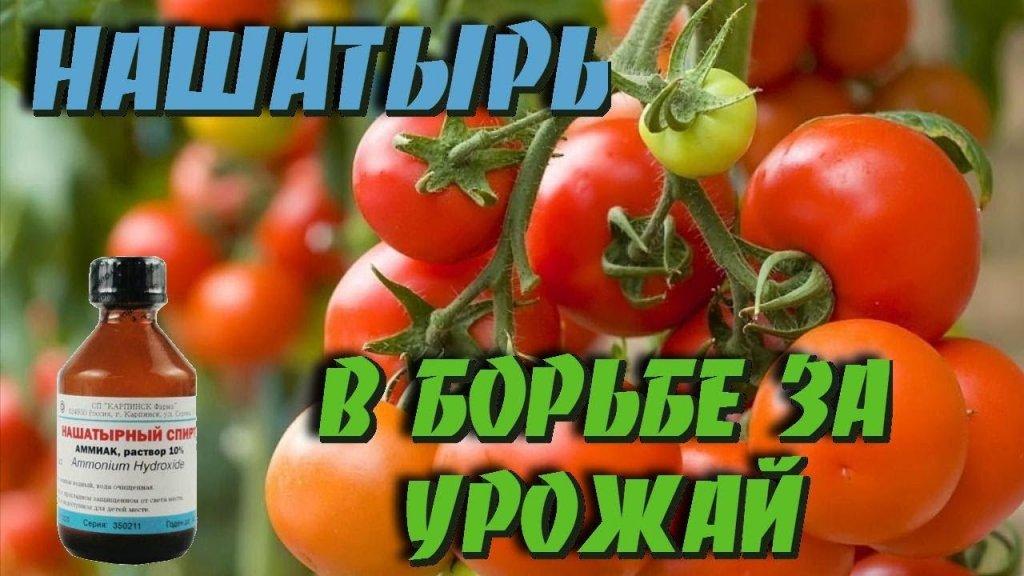 НАШАТЫРНЫЙ СПИРТ - ЗАЩИТНИК РАСТЕНИЙ!