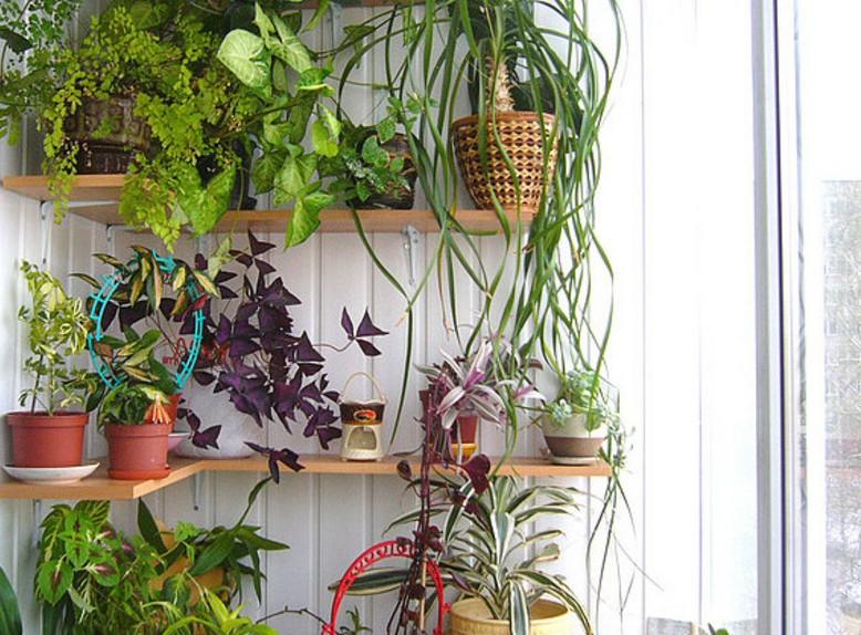Зимний сад в квартире: оранжерея для души
