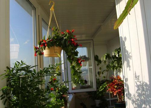 Зимний сад на нашем балконе.