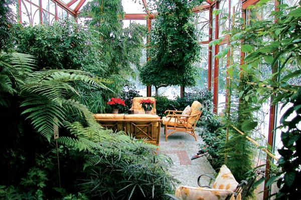 Как обустроить небольшую оранжерею. Растения для зимнего сада