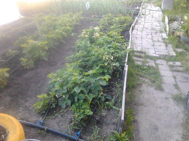 Четыре нестандартных способа полить огород. Поливка огорода без лейки. 4 способа