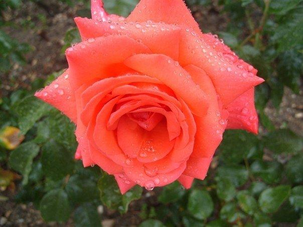 Свита для цветочной королевы