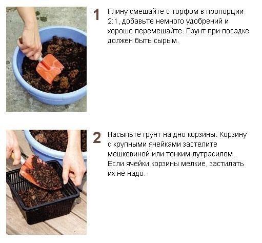 Посадка водных растений. Мастер-класс
